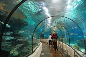 aquarium Barcelona - Paul Hermans (Wikimedia)
