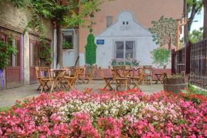 City_Hostel_Novi_Sad_-_garden